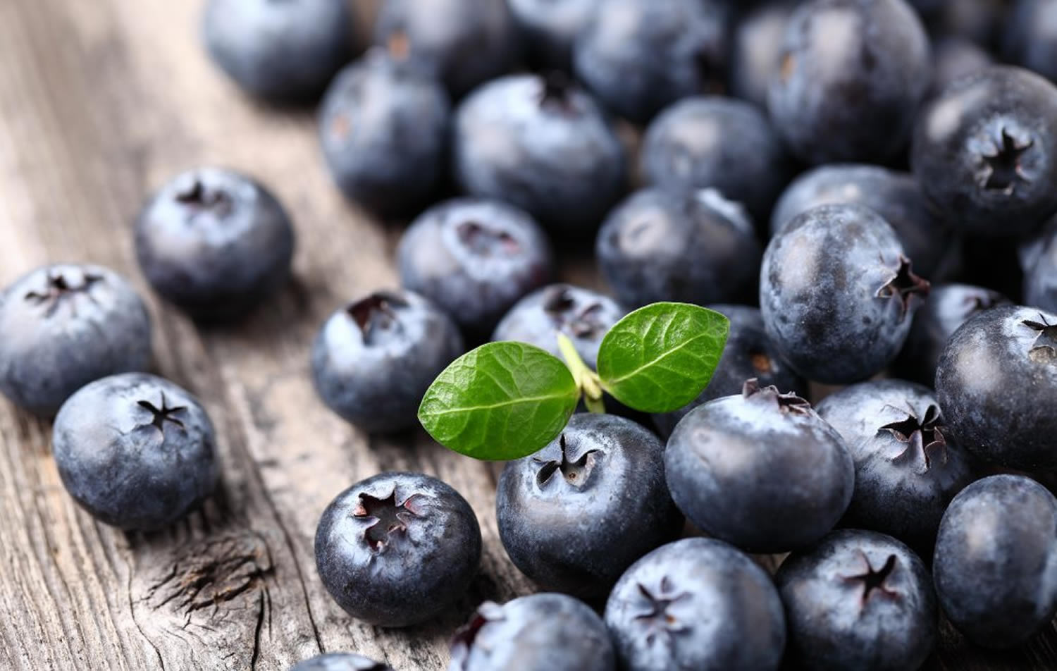 bilberry health benefits