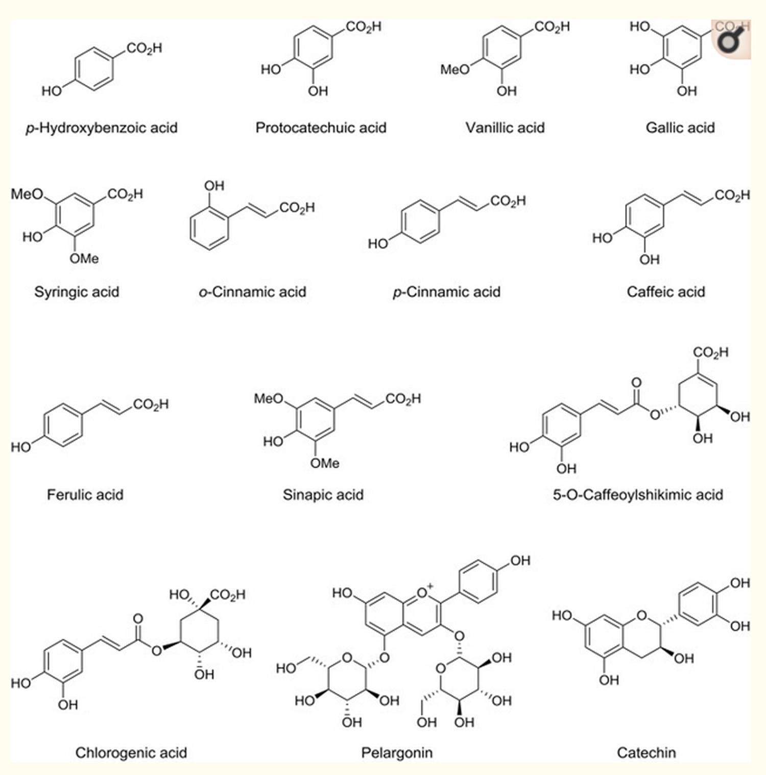 dates fruit phenolic acid compounds