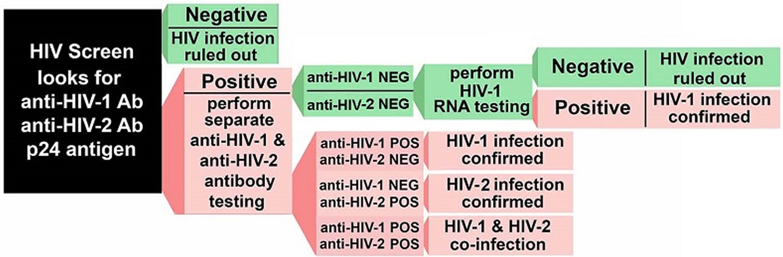 HIV blood test - HIV Screening Algorithm