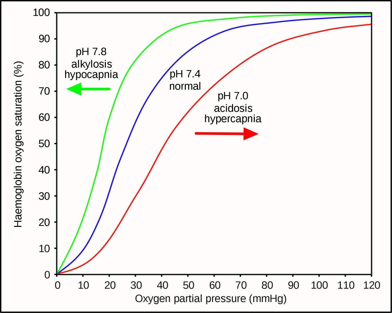 Oxygen-Haemoglobin_dissociation_curves