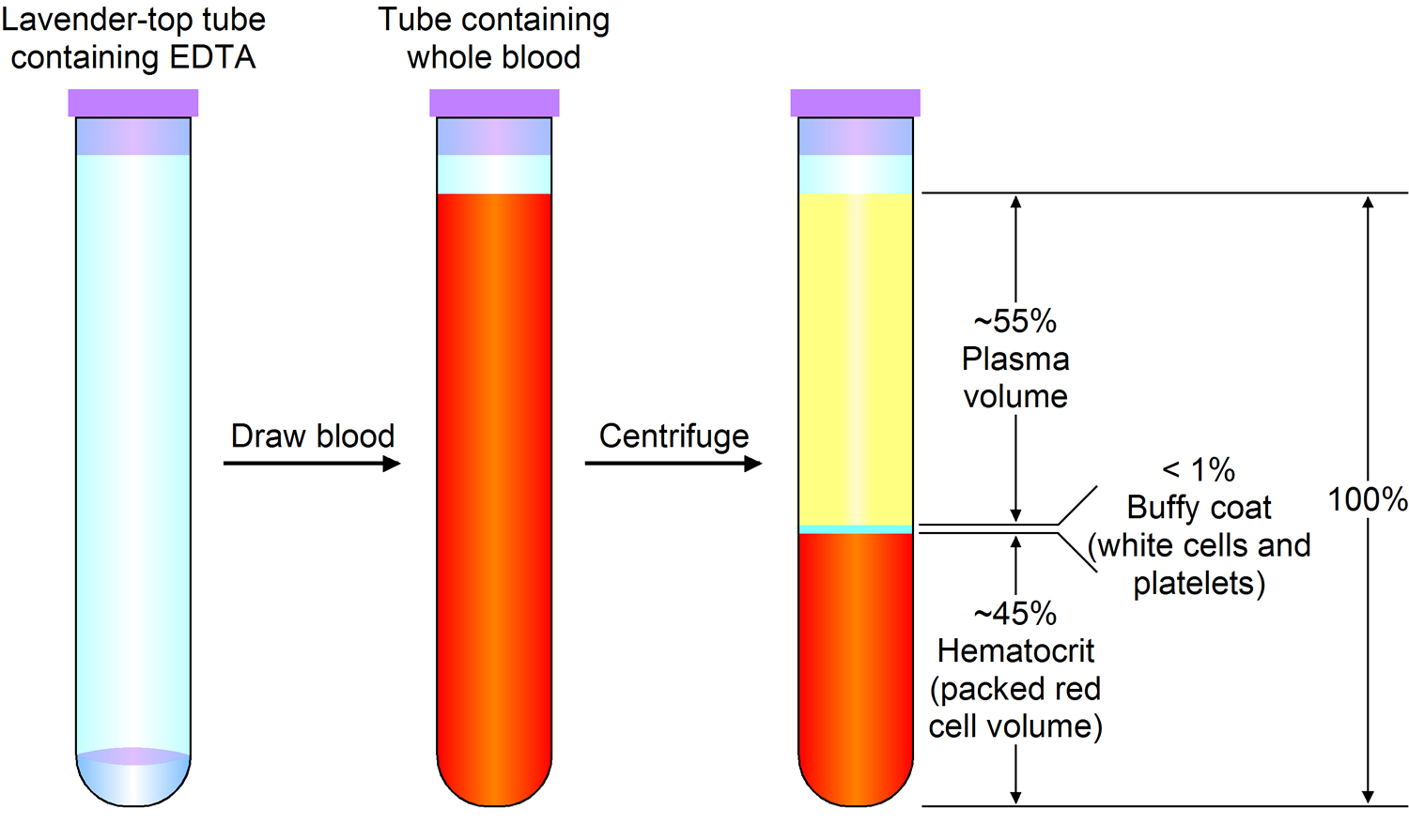 Red Blood Cells Function - Causes Of Elevated, High, Large-2059