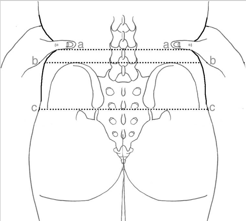 Anatomy of lumbar puncture