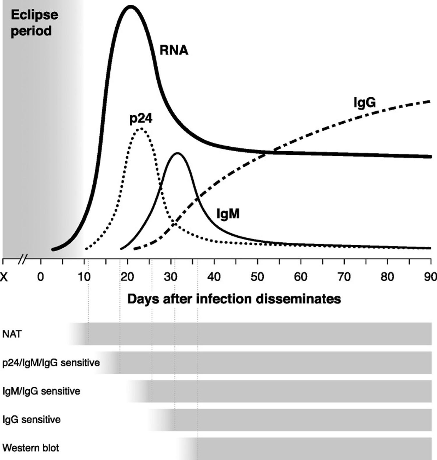 Timeline of virologic and serologic events after HIV infection