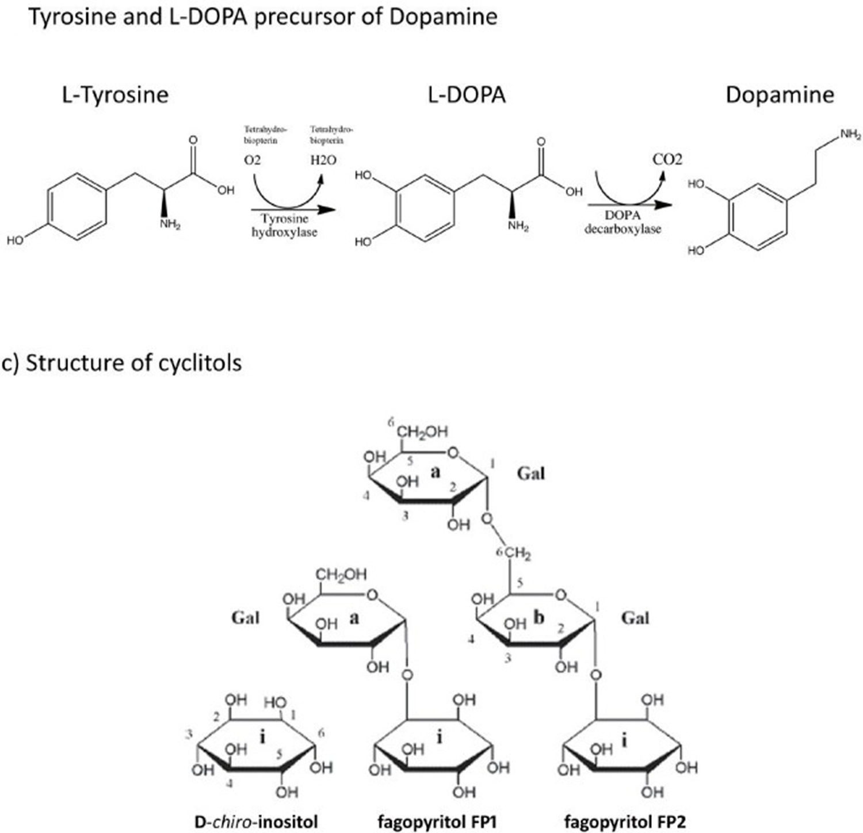 Mucuna pruriens bioactive compounds