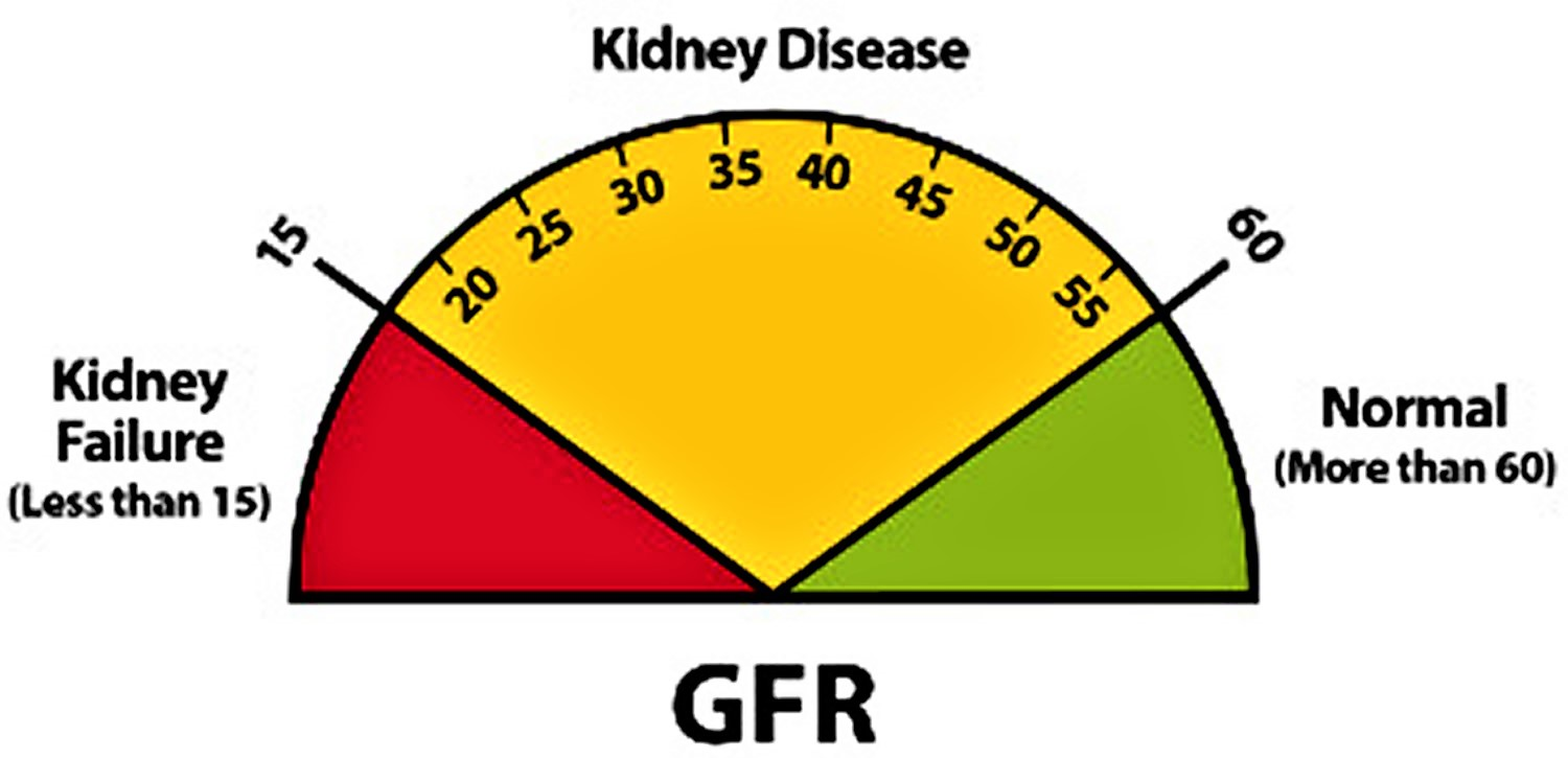Kidney function test results