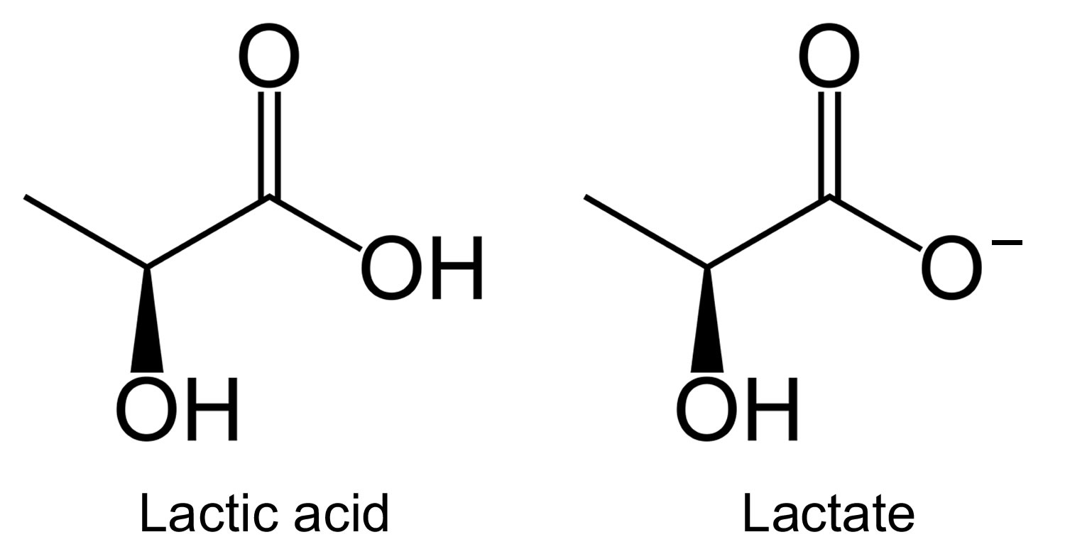actic acid and lactate chemical structure