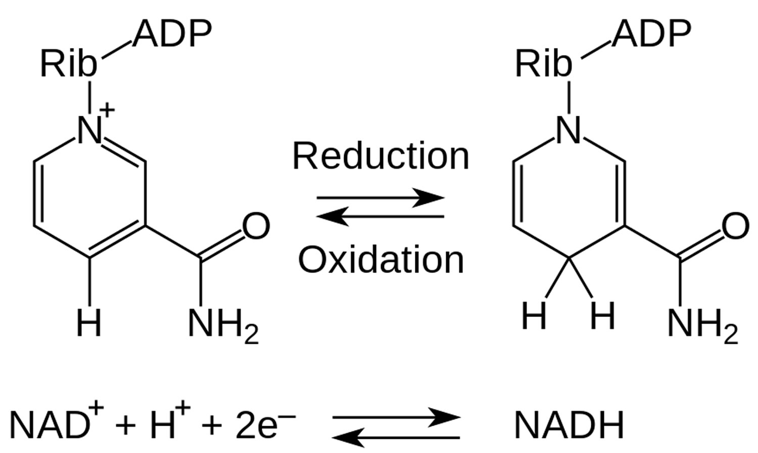 NADH redox reaction
