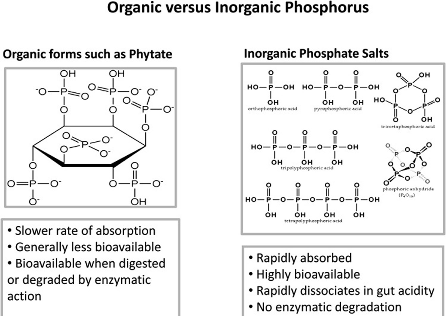 phosphorus types in foods