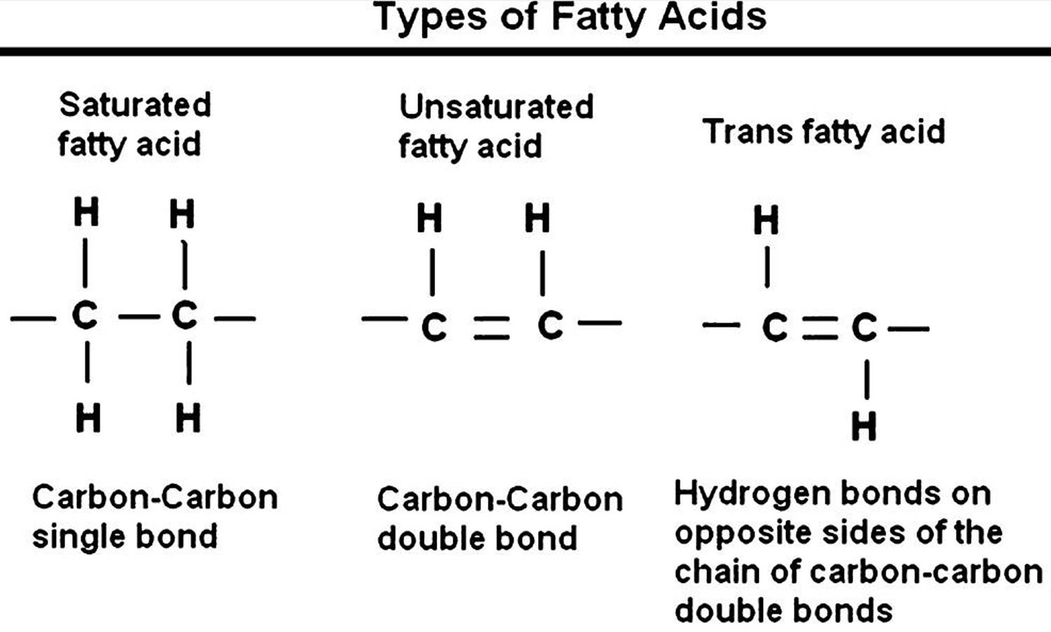 types-of-fats