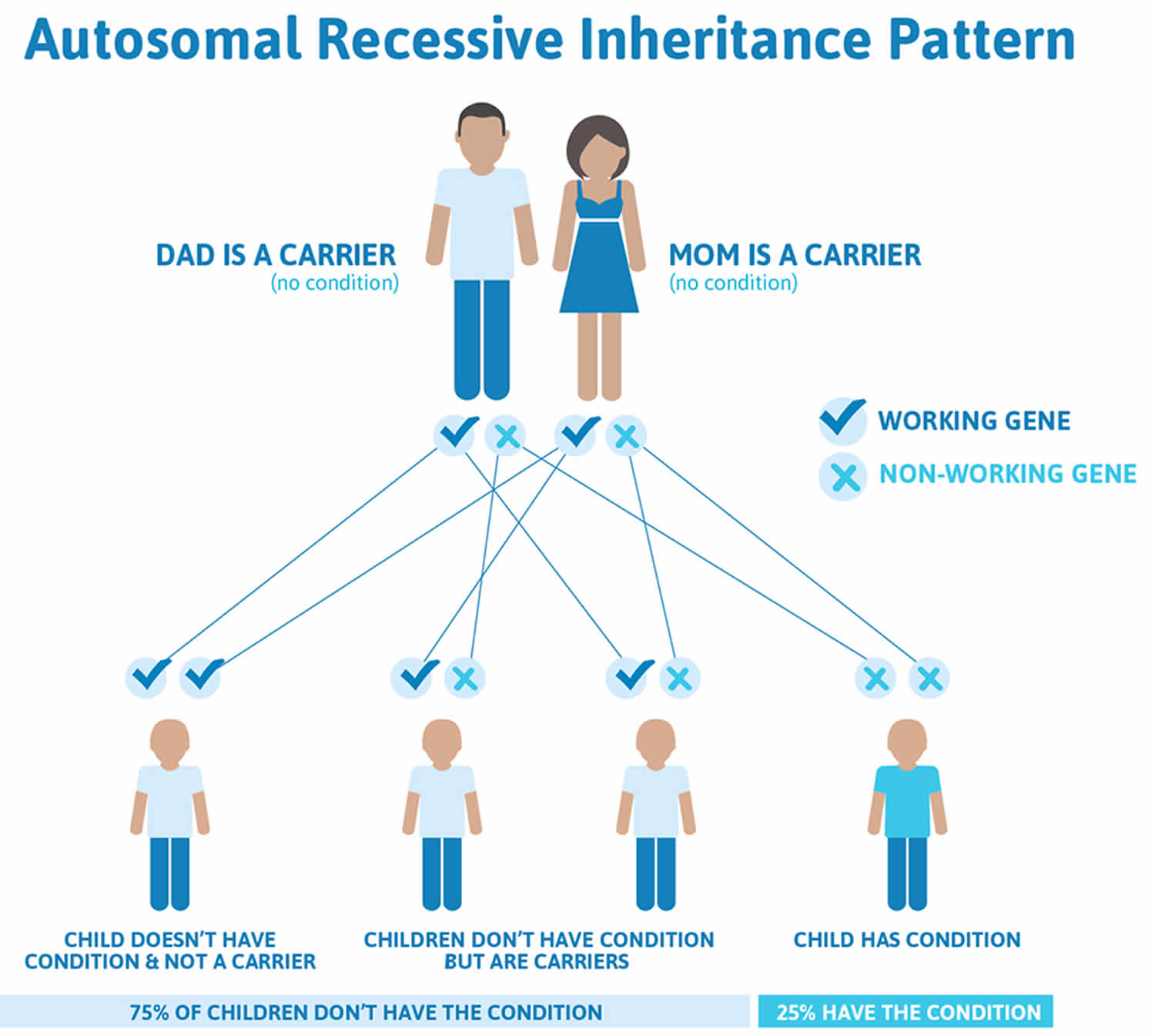 Trimethylaminuria autosomal recessive inheritance pattern
