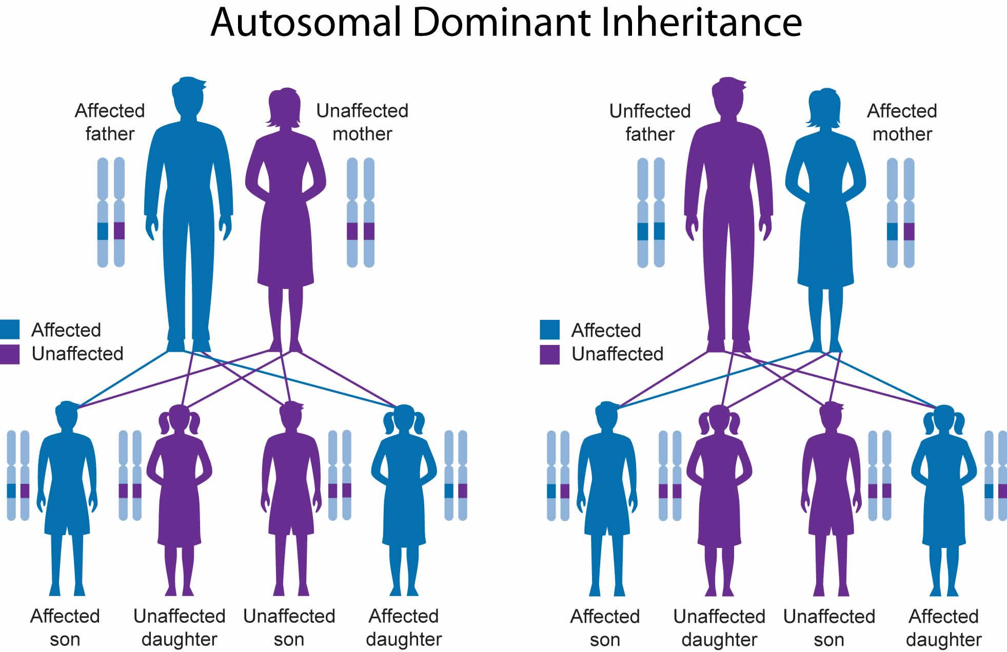 Waardenburg syndrome autosomal dominant inheritance pattern