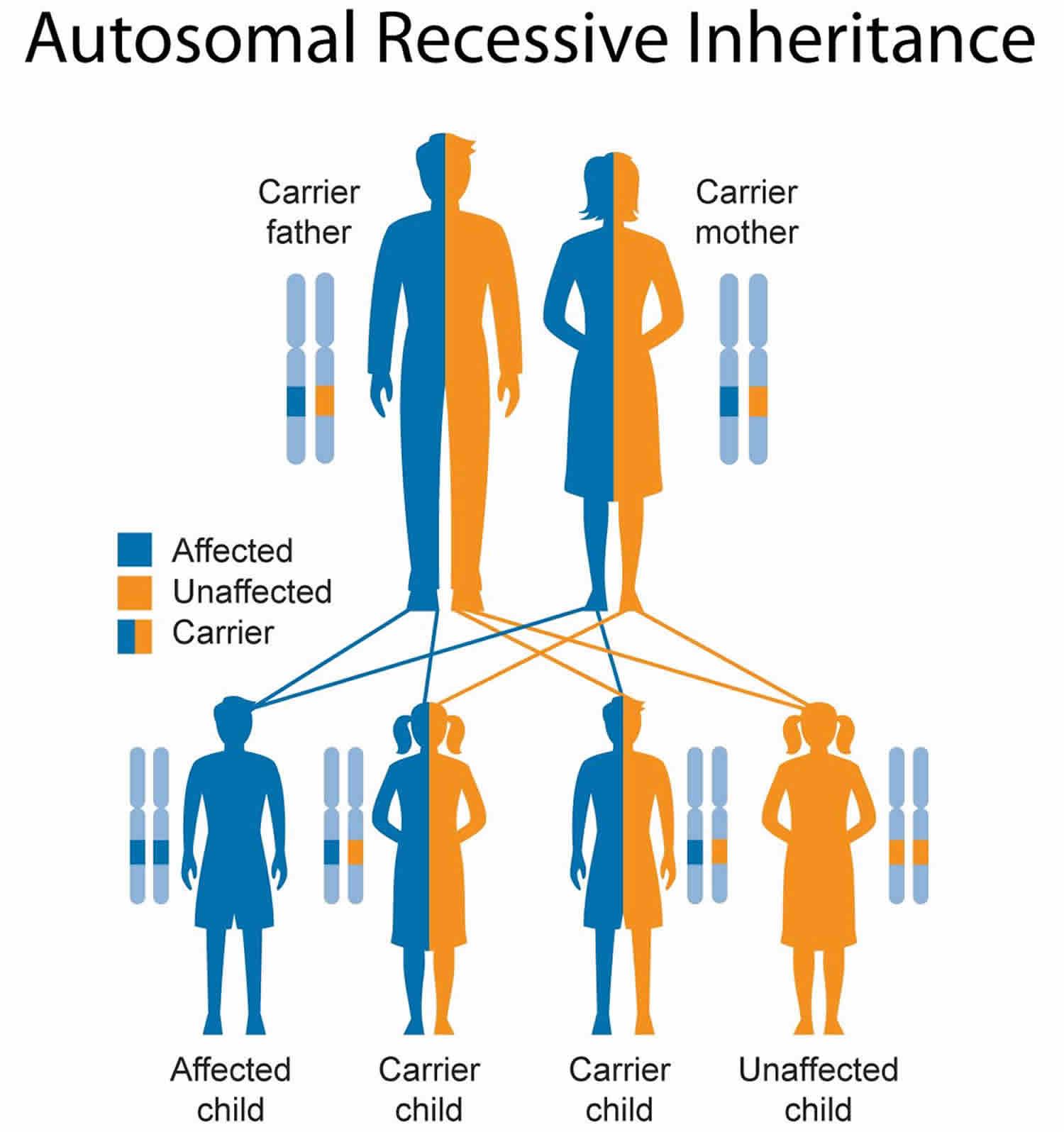 Waardenburg Syndrome Causes Types Symptoms Diagnosis