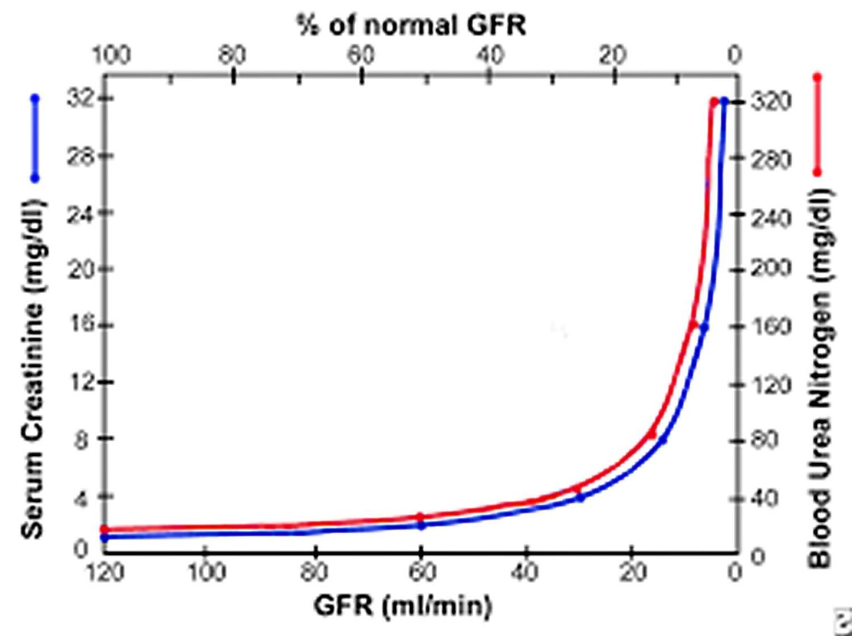 Graph shows relation of glomerular filtration rate (GFR) to steady-state serum creatinine and blood urea nitrogen (BUN) levels