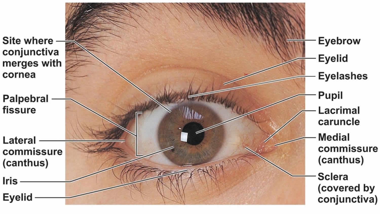 Pterygium Causes  Symptoms  Diagnosis  Treatment
