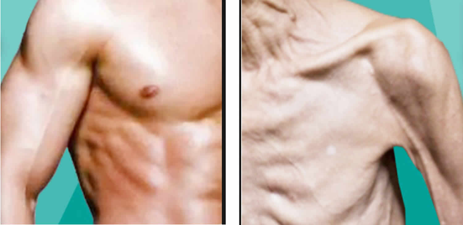 muscle mass aging adults