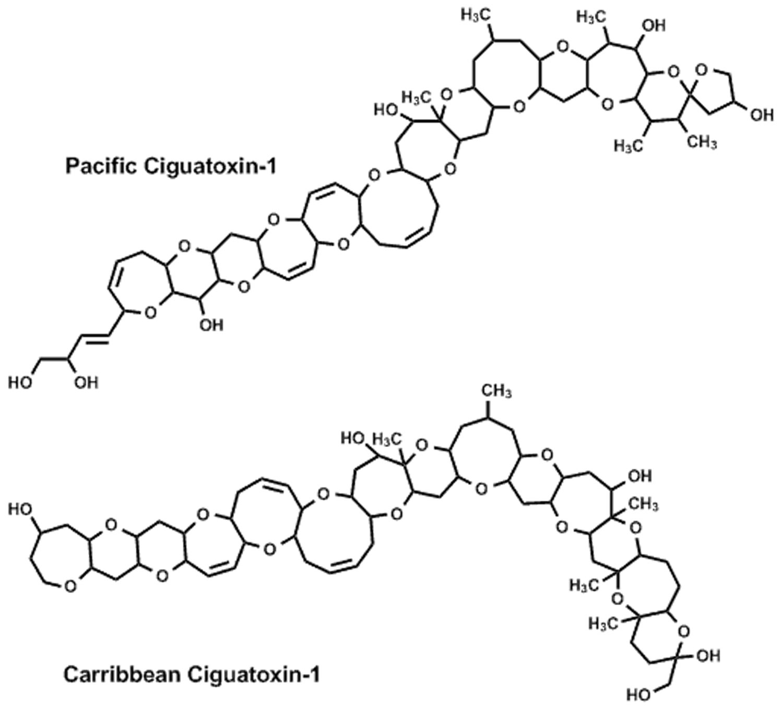 Ciguatera toxins
