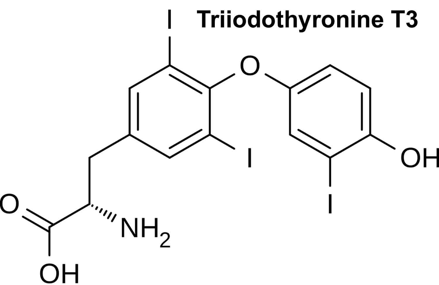 Triiodothyronine T3 Function Triiodothyronine Normal Range