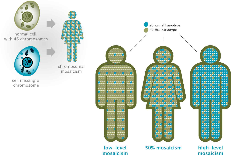 chromosomal mosaicism