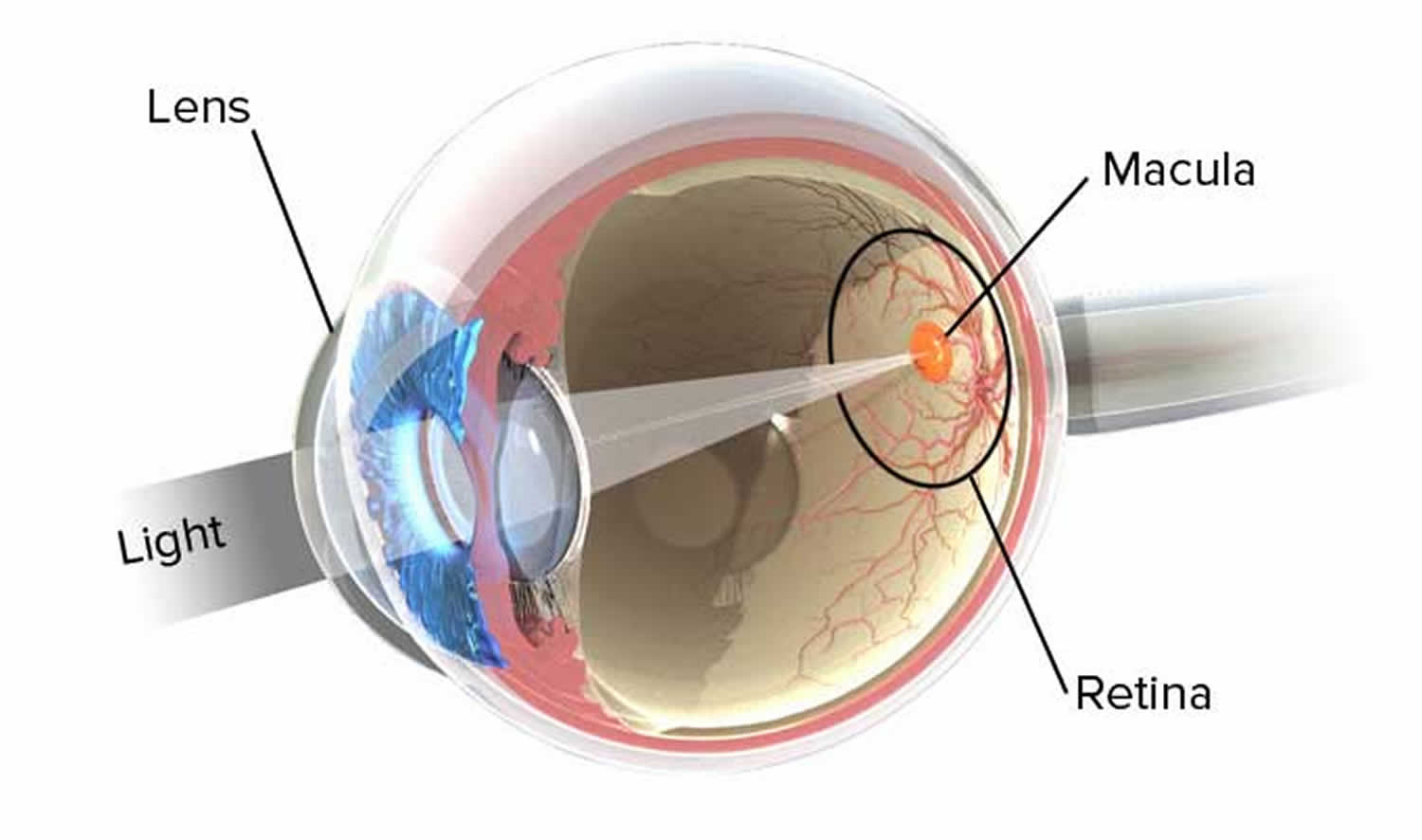 normal eye refraction